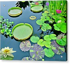 Watergarden  Acrylic Print by Debra     Vatalaro