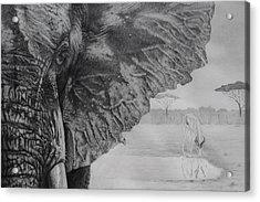 Waterhole Acrylic Print