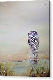 Watering Hole Acrylic Print