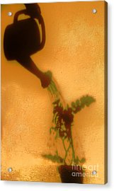 Watering Plant Acrylic Print by William Voon