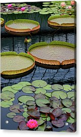 Waterlilies And Platters 2 Acrylic Print