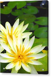 Waterlilies In Pond Acrylic Print