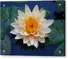Waterlily After A Shower Acrylic Print by Raymond Salani III