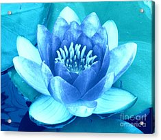 Waterlily Blue 2 Acrylic Print by Margaret Newcomb