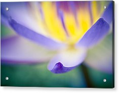 Acrylic Print featuring the photograph Waterlily Dreams 6 by Priya Ghose