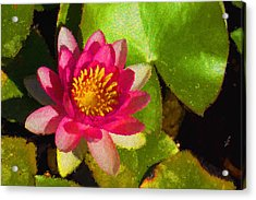 Waterlily Impression In Fuchsia And Pink Acrylic Print