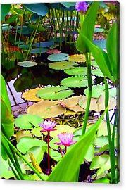 Waterlily Pond Acrylic Print