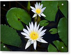 Waterlily Two Acrylic Print