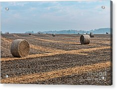 Acrylic Print featuring the photograph Waupaca Straw Rolls by Trey Foerster
