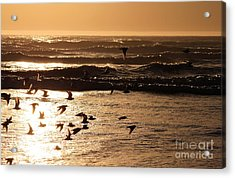 Waves And Wings Acrylic Print