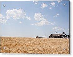 Waving Wheat Homestead Acrylic Print