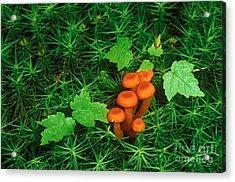 Wax Cap Fungi Acrylic Print by Jeff Lepore