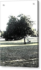 Wc Resting Tree Acrylic Print by Nicki Bennett
