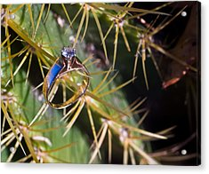 Wdding Ring And Cactus Spines 5 Acrylic Print by Douglas Barnett