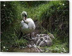 We All Here Mum Acrylic Print by Svetlana Sewell