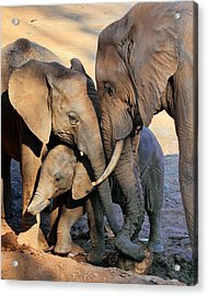 We Are Family Acrylic Print