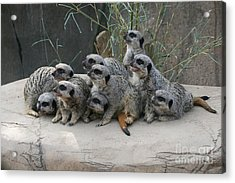 We Are Family Acrylic Print by Judy Whitton