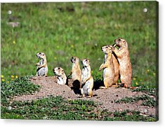 We Are Family Acrylic Print by Lana Trussell