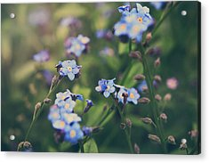 We Lay With The Flowers Acrylic Print by Laurie Search