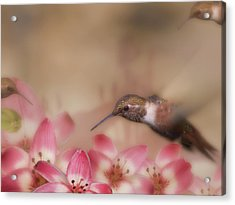 We Love Those Lilies Acrylic Print by Diane Schuster