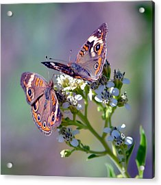 We Make A Beautiful Pair Acrylic Print