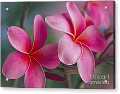 Acrylic Print featuring the photograph We Were Together . . .  by Sharon Mau