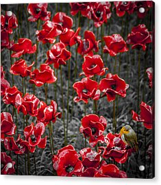We Will Remember Them Acrylic Print by S J Bryant