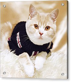 Wearing A Sweater Acrylic Print by Aiolos Greek Collections