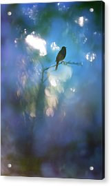 Weather To Fly  Acrylic Print