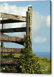 Weathered Fence Acrylic Print by Vivian Christopher