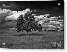 Weathered Oak Acrylic Print by Dan Hefle