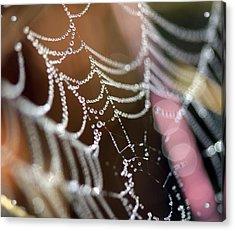 Web 20131022-64 Acrylic Print by Carolyn Fletcher