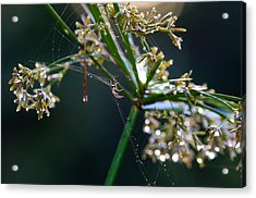 Acrylic Print featuring the photograph Web After The Rain by Adria Trail