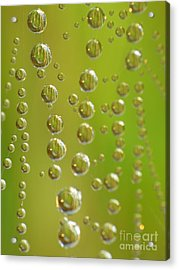 Web And Drops Acrylic Print by Odon Czintos