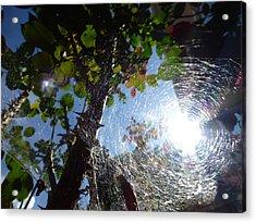 Web Acrylic Print