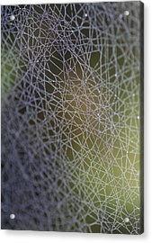 Web Connections Acrylic Print