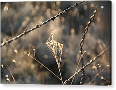 Acrylic Print featuring the photograph web by David S Reynolds