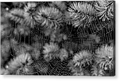 Acrylic Print featuring the tapestry - textile Web Drops by Dennis Bucklin