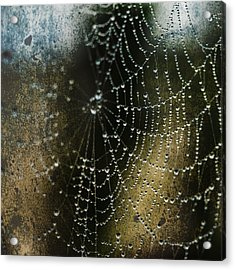 Web In The Mist Acrylic Print
