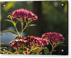 Acrylic Print featuring the photograph Web by Joe Winkler