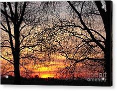 Web Of Branches Acrylic Print by David Warrington
