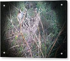 Web Of Dew Acrylic Print by Chasity Johnson