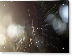 Web Of Flares Acrylic Print by Greg Allore
