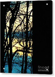 Web Acrylic Print by Sharon Costa