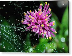 Webbed Water Droplets Acrylic Print