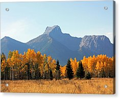 Wedge Mountain And Aspen Acrylic Print