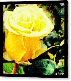 #wednesdays #theletterislove A #rose By Acrylic Print