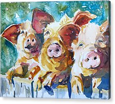 Wee 3 Pigs Acrylic Print