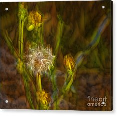 Acrylic Print featuring the photograph Weed Art by Shirley Mangini