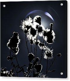 Weed Silhouette Acrylic Print